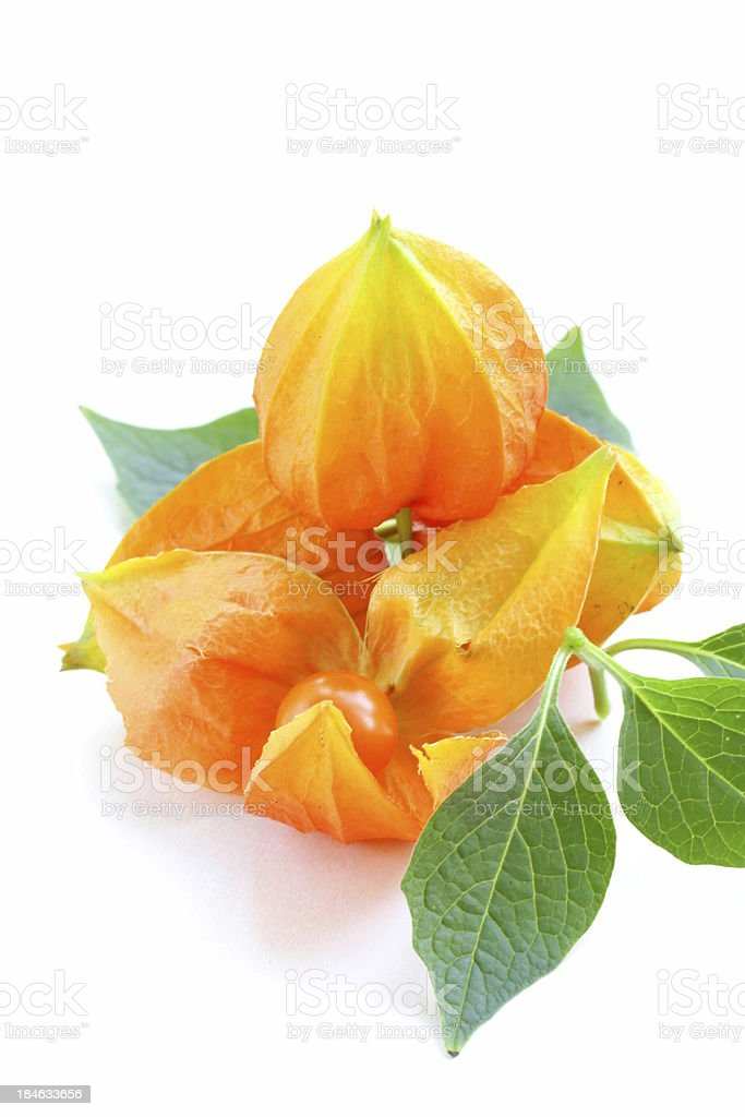 orange physalis berries with green leaves royalty-free stock photo