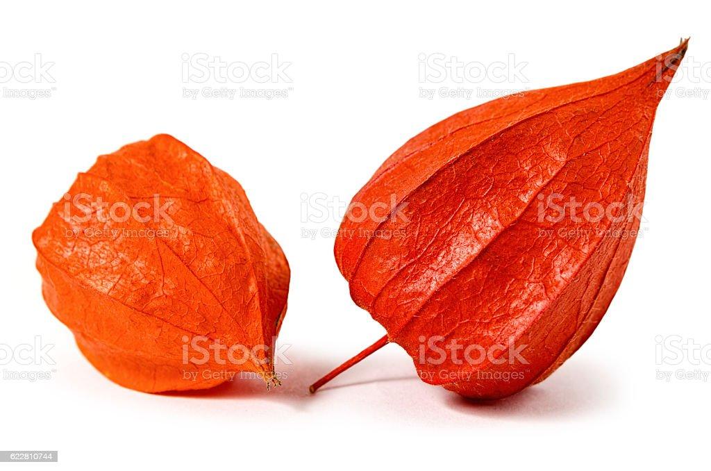 Orange physalis isolated stock photo