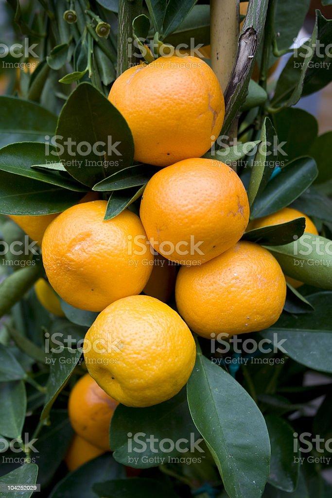 Orange Lizenzfreies stock-foto