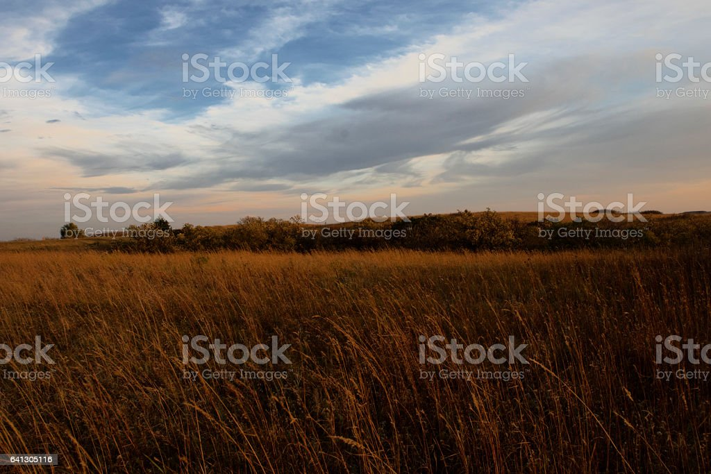 Orange Prairie Grass stock photo