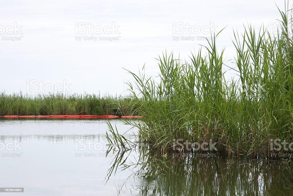 Orange Protective Boom Surrounds Along Wetland Edges on Mississippi/Louisiana  Coast stock photo