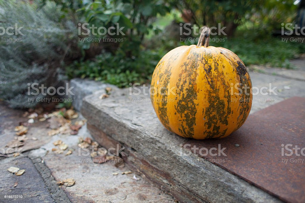 Orange Pumkin on the doorstep stock photo