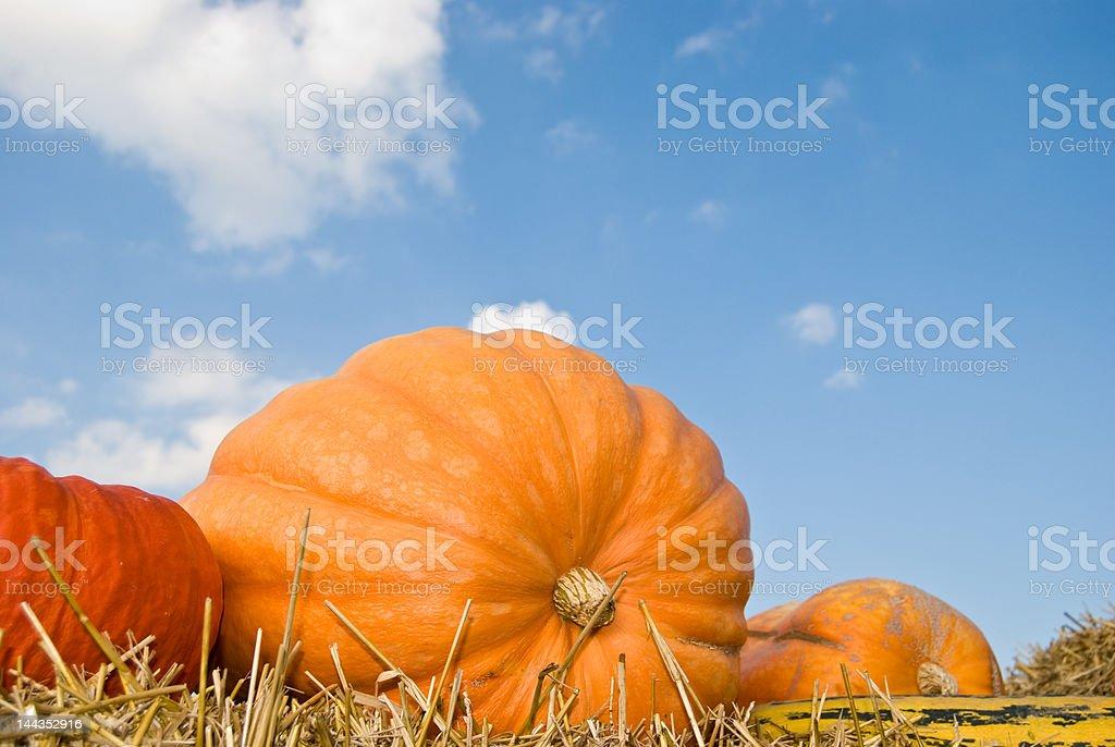Orange pumpkin against the blue sky royalty-free stock photo