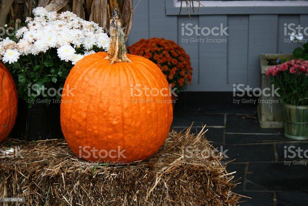 Orange Pumpkin on Hay Bale with Chrysanthemums stock photo