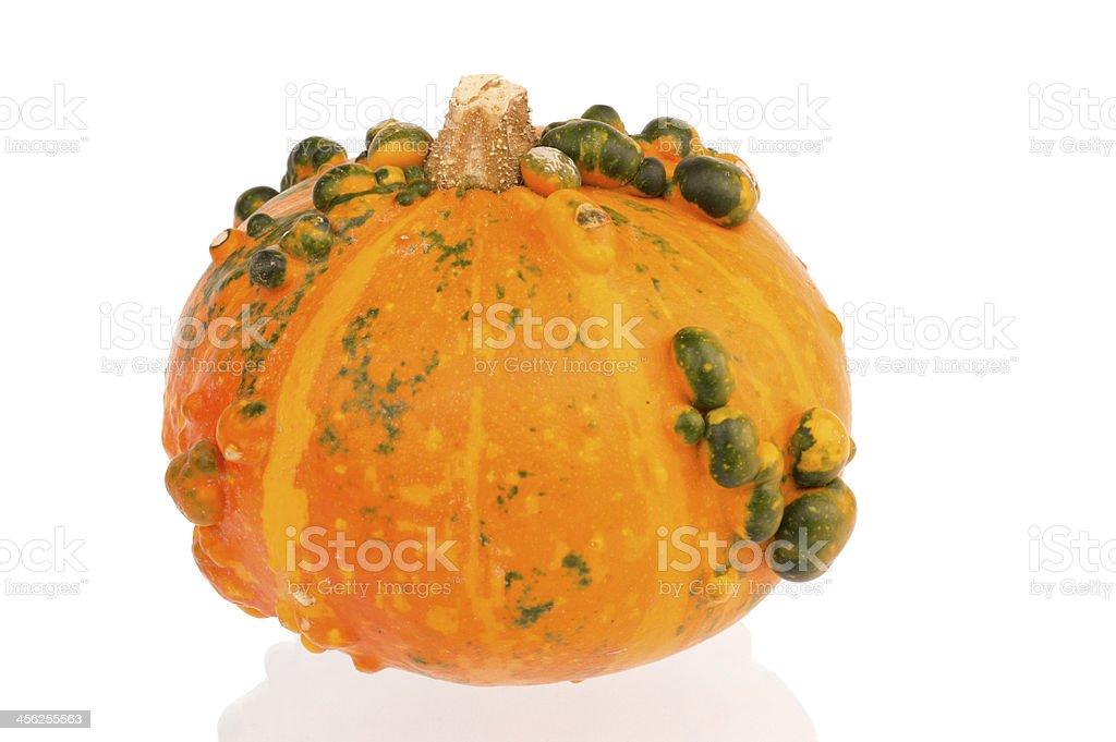 Orange pumpkin with green bulbs royalty-free stock photo