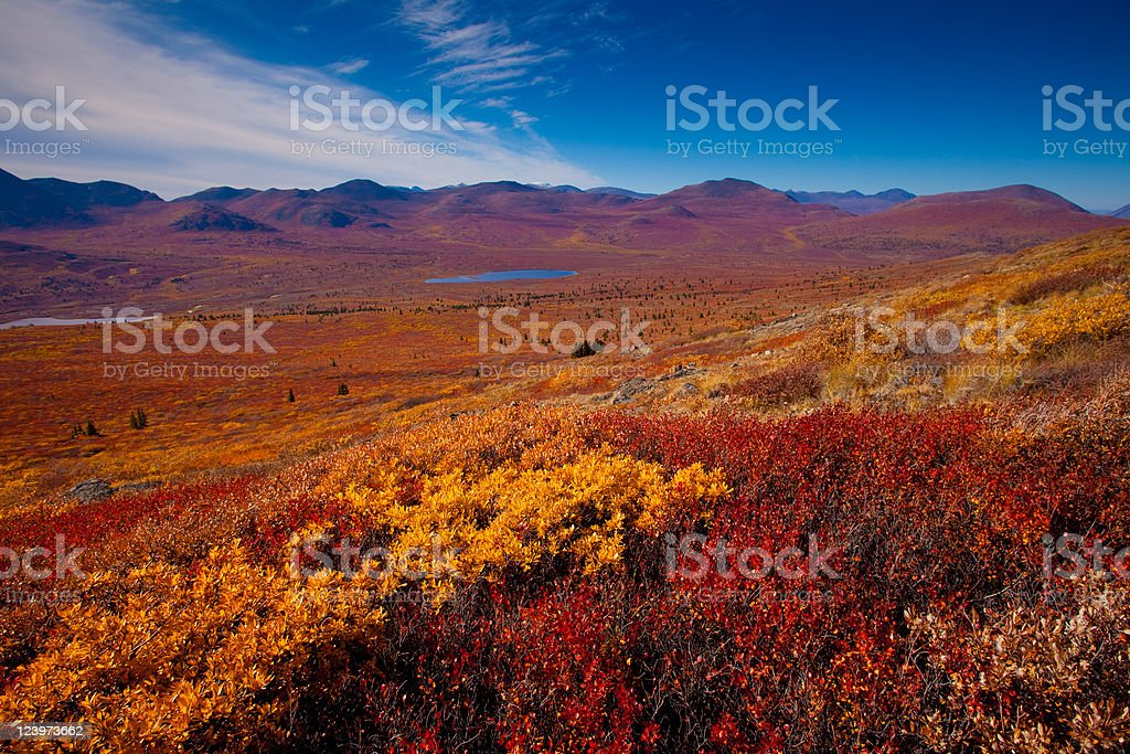 Orange, red and yellow colors of the Alpine tundra royalty-free stock photo