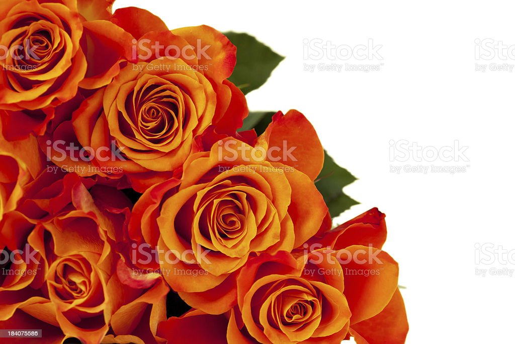 Rosas cor-de-laranja foto royalty-free