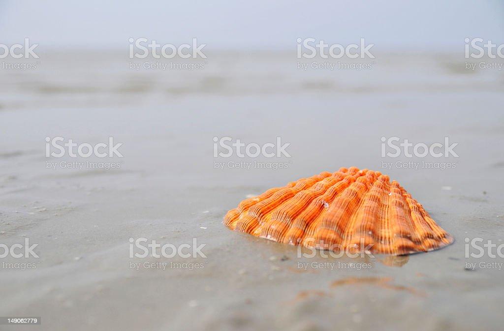 orange shell royalty-free stock photo