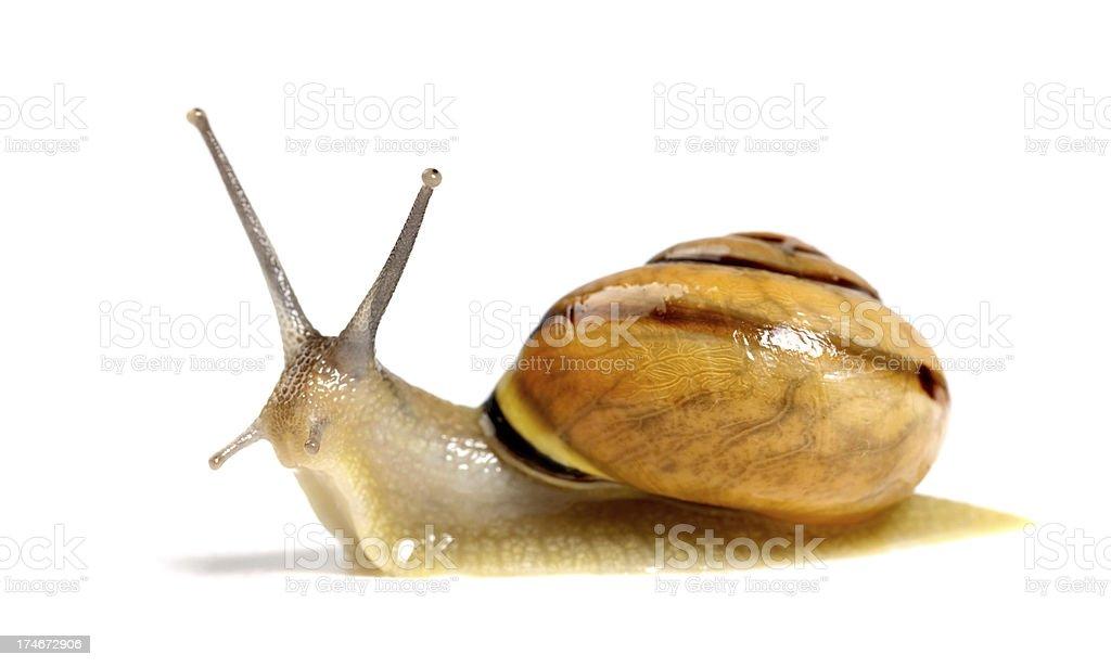 orange snail stock photo