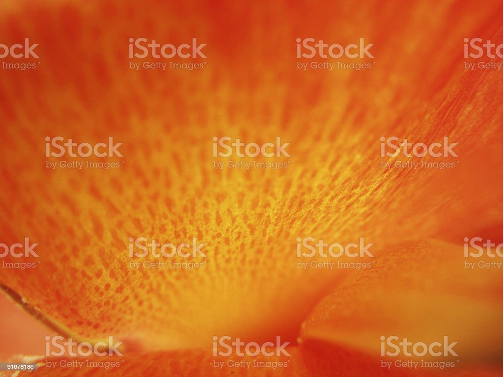 Orange spots royalty-free stock photo