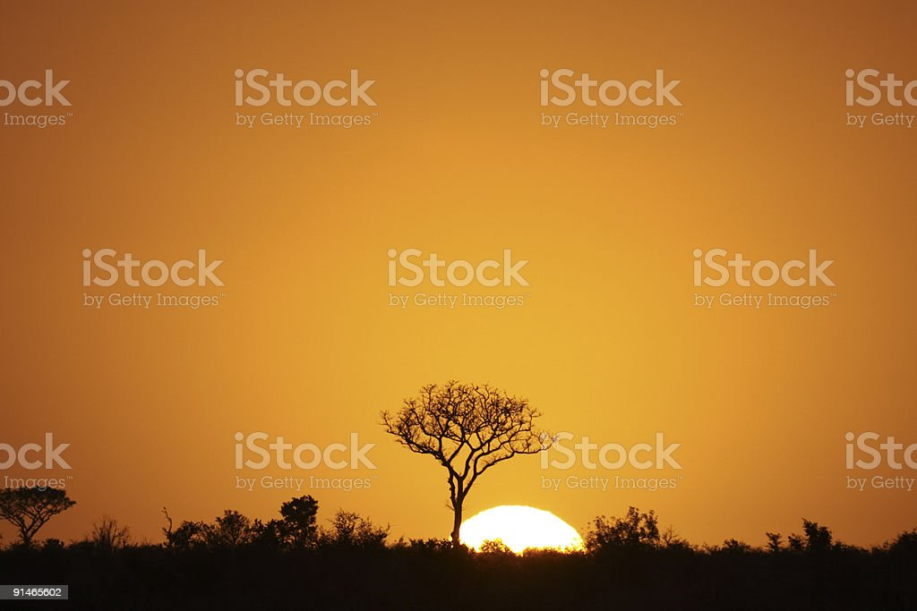 Orange sunrise silhouetting Kruger Park, South Africa stock photo
