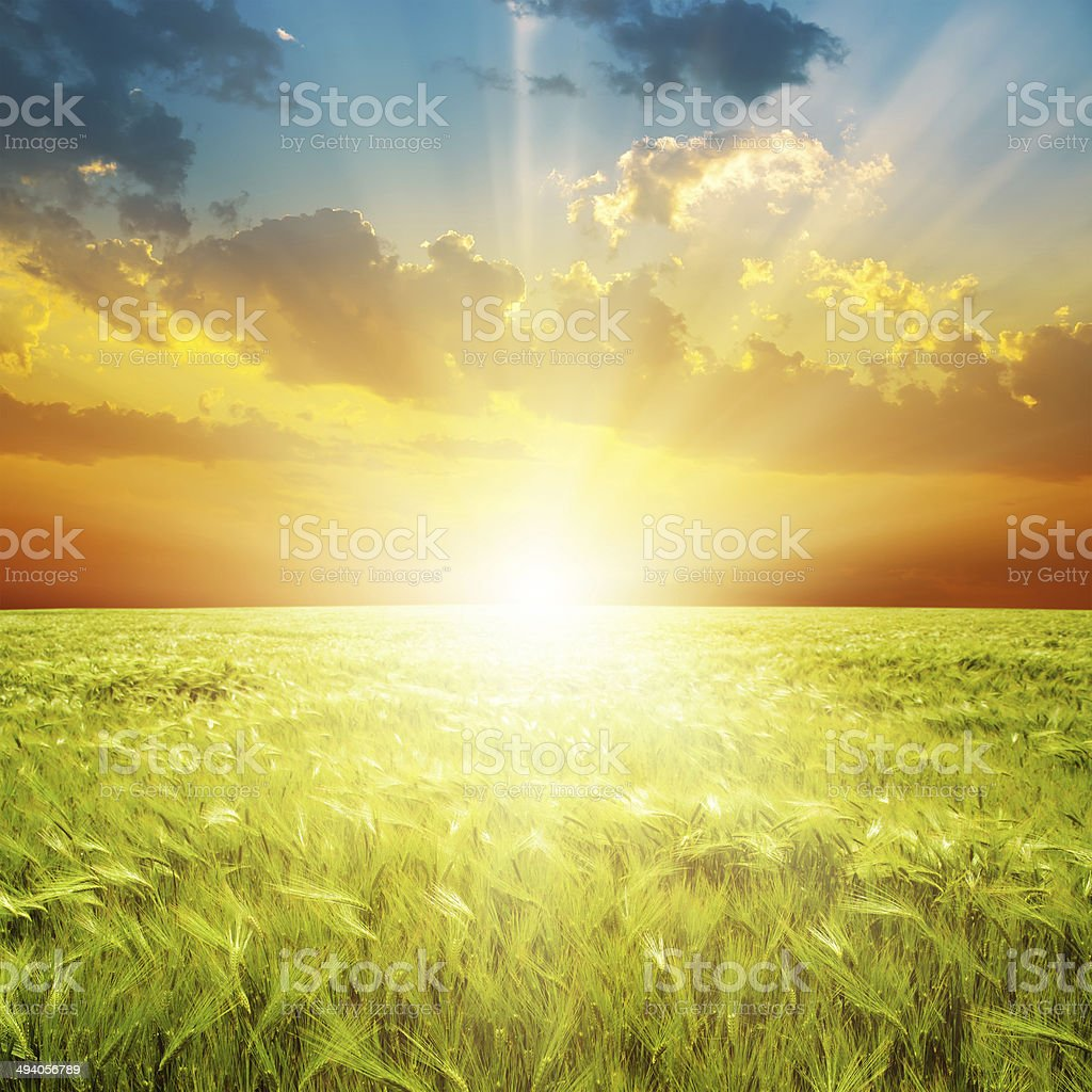 orange sunset over green agriculture field stock photo