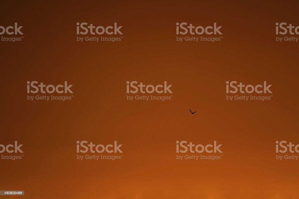 Orange Sunset with a Single Bird stock photo