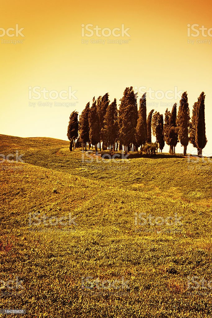Orange Tones for Tuscan Cypresses, Val d'Orcia in Italy stock photo