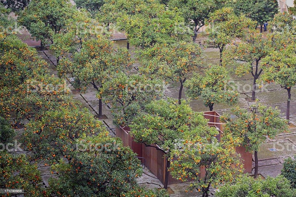 Orange tree courtyard - Patio de los Naranjos stock photo