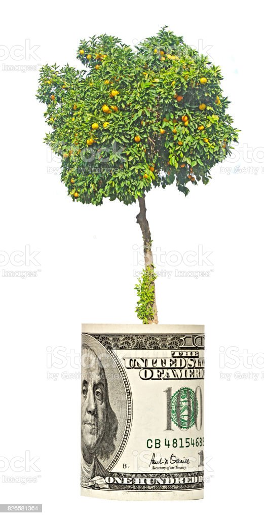 orange tree  growing from dollar bill stock photo