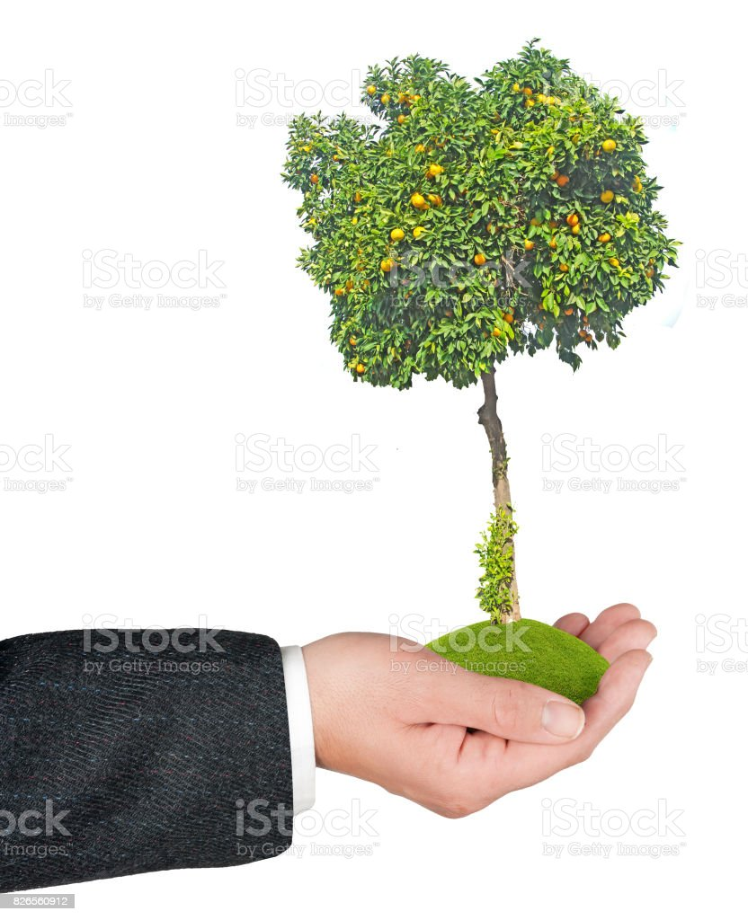 Orange tree in hand stock photo