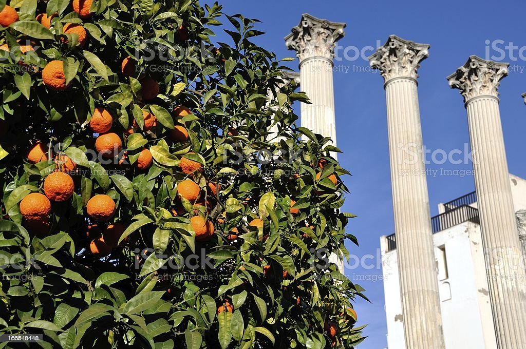 Orange tree with Roman ruins stock photo