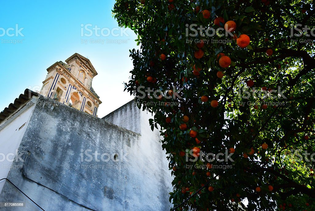 Orange trees in an old abandoned garden stock photo