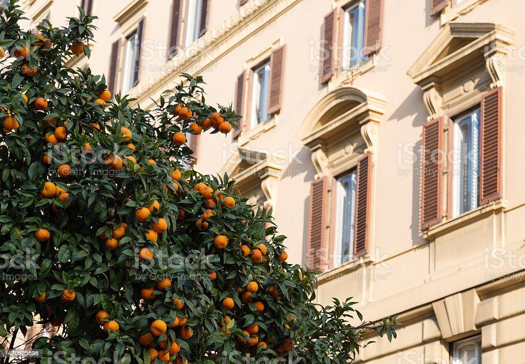 Orange Trees in Rome stock photo