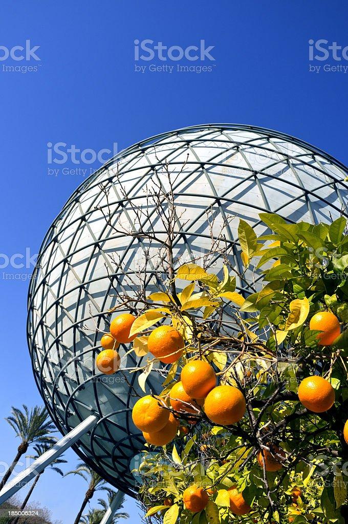 Orange trees royalty-free stock photo