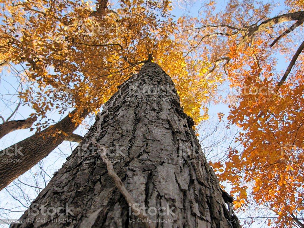 Orange Treetops stock photo