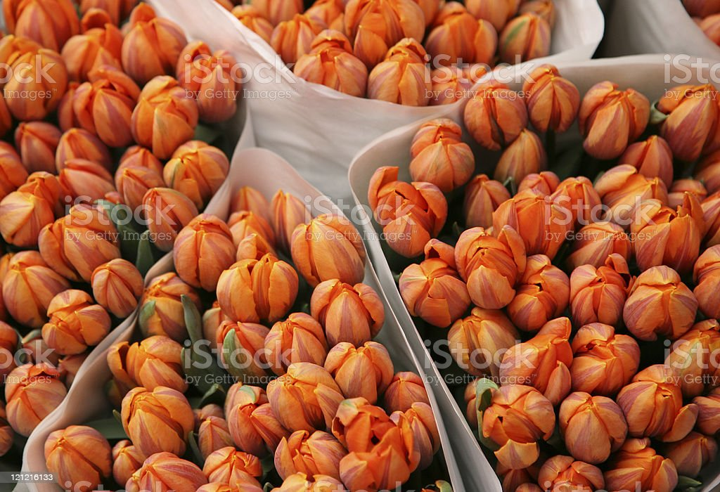 Orange Tulips in Flower Market royalty-free stock photo