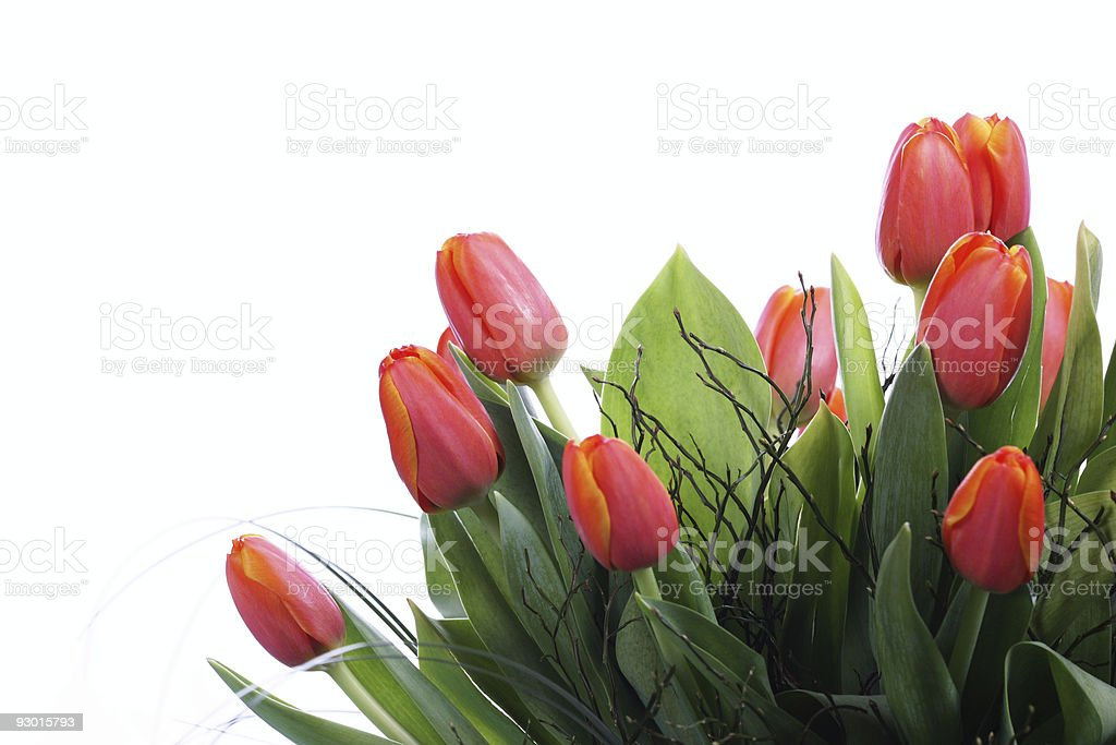 Orange Tulips on Right stock photo