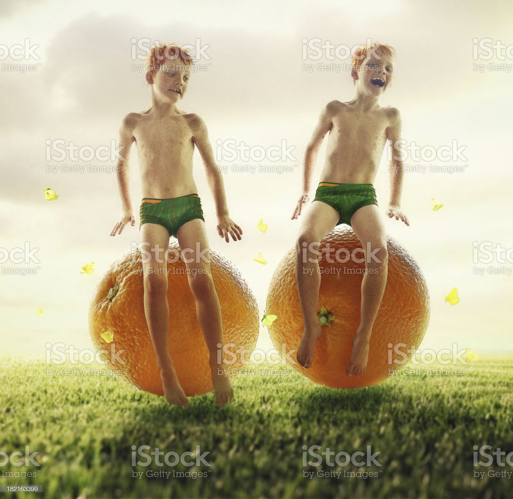 Orange Twins royalty-free stock photo