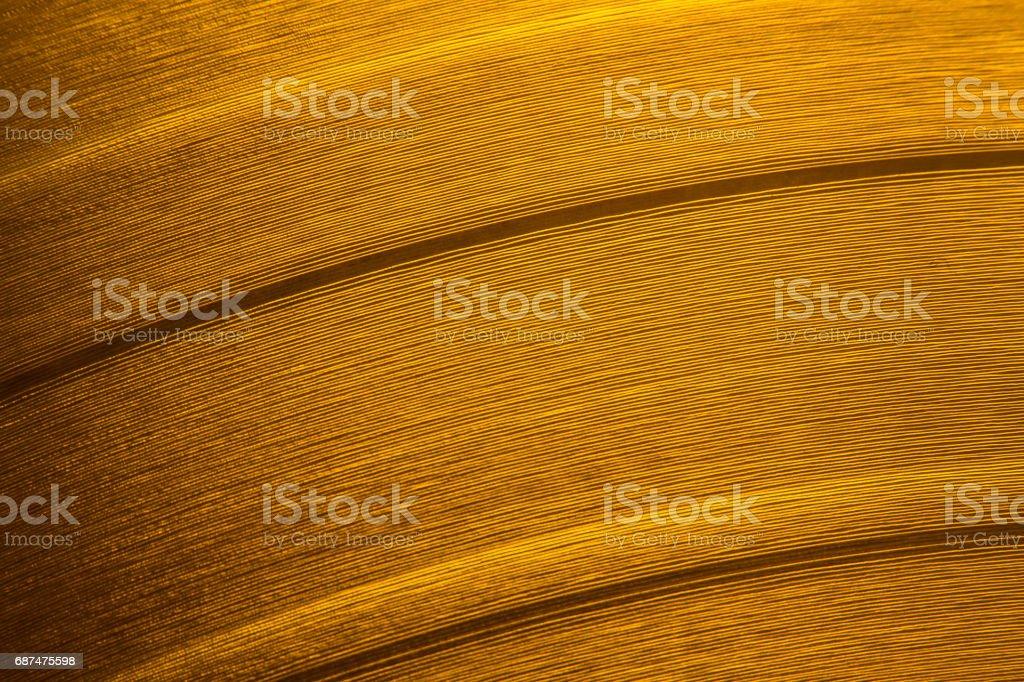 Orange vinyl record stock photo