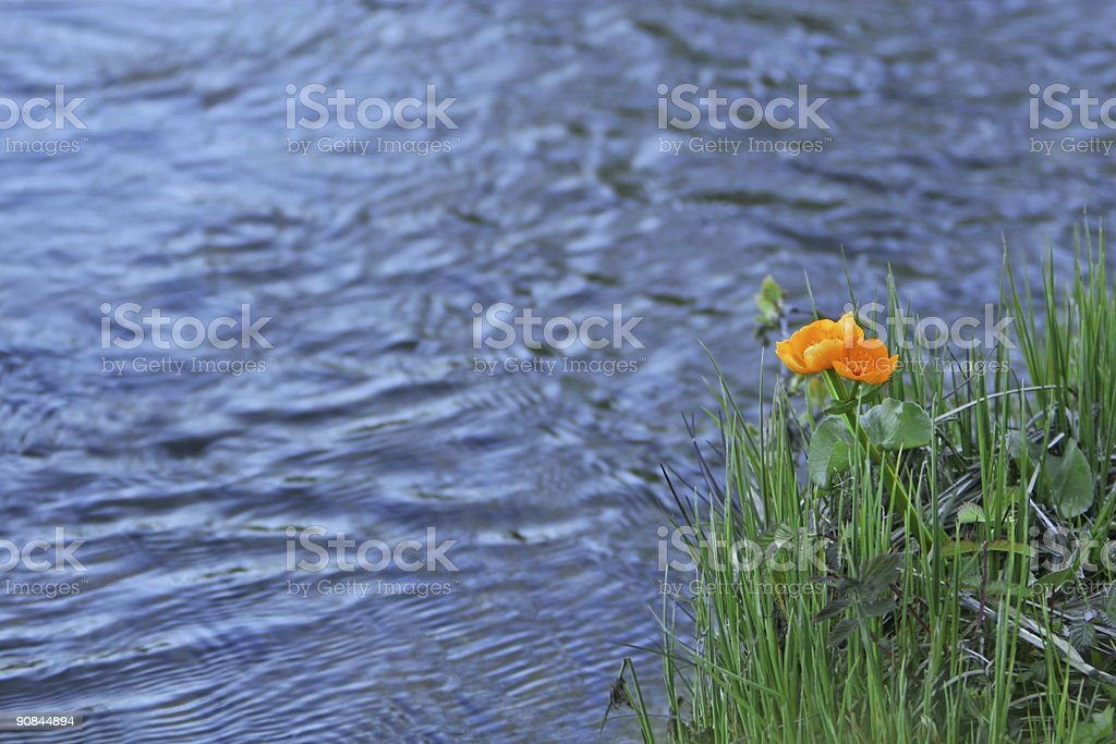 orange water flower royalty-free stock photo