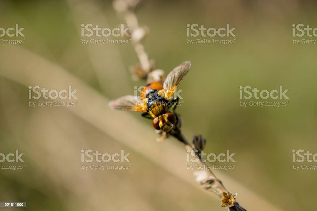 Orange winged beetle like a ladybug on the plant stock photo