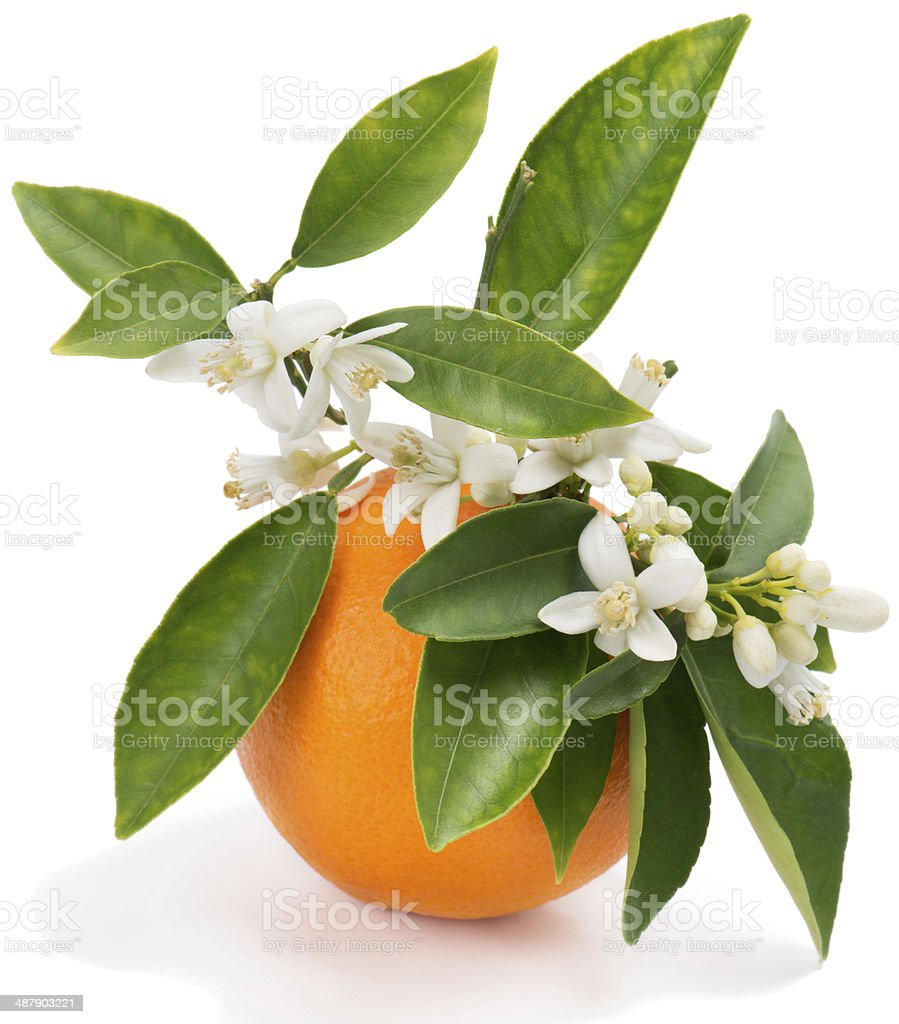 Orange with flowers stock photo
