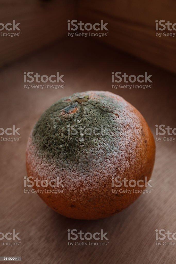 orange with green mold. stock photo