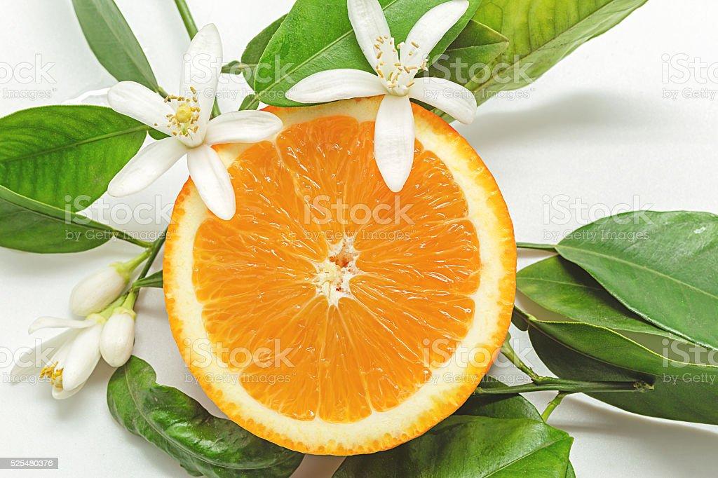 folhas e laranja com flor em fundo branco foto royalty-free