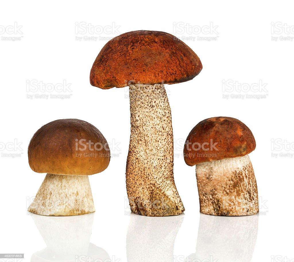 Orange-cap Boletus and porcini mushroom stock photo