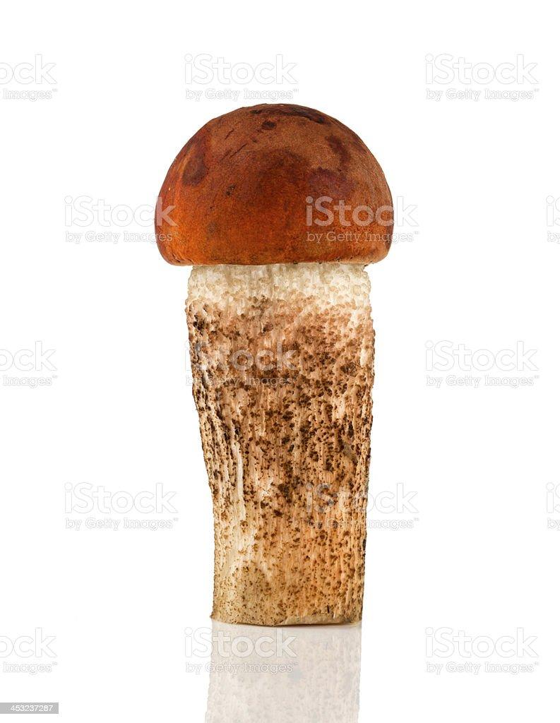 Orange-cap Boletus mushroom stock photo
