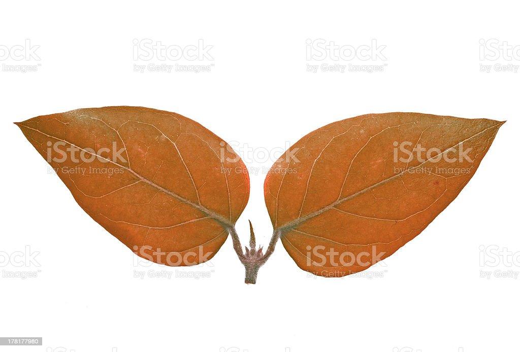 orange-colored bipartite leaf stock photo