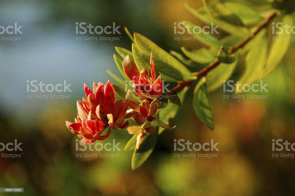 Orange/red flower stock photo