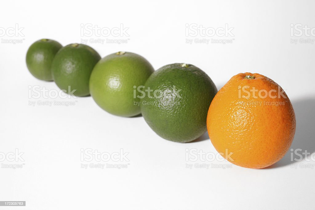 Oranges in a Row stock photo
