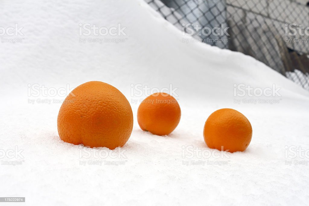 oranges in snow royalty-free stock photo