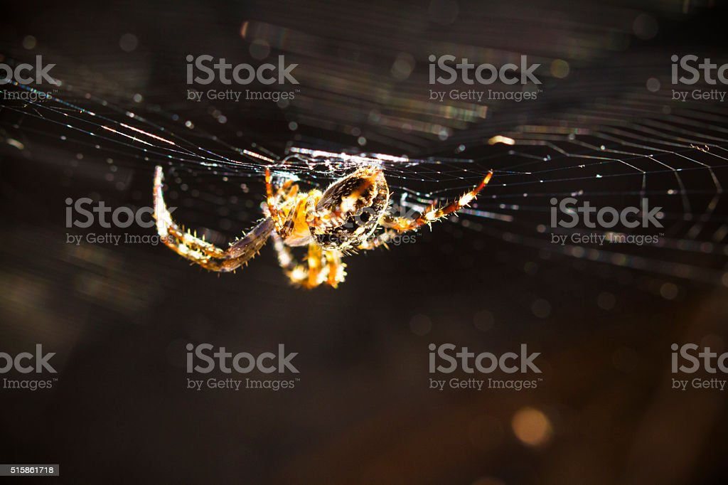 Orb Weaver Spider Hanging On Its web stock photo