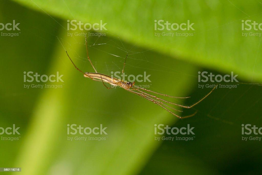 Orb weaver spider stock photo