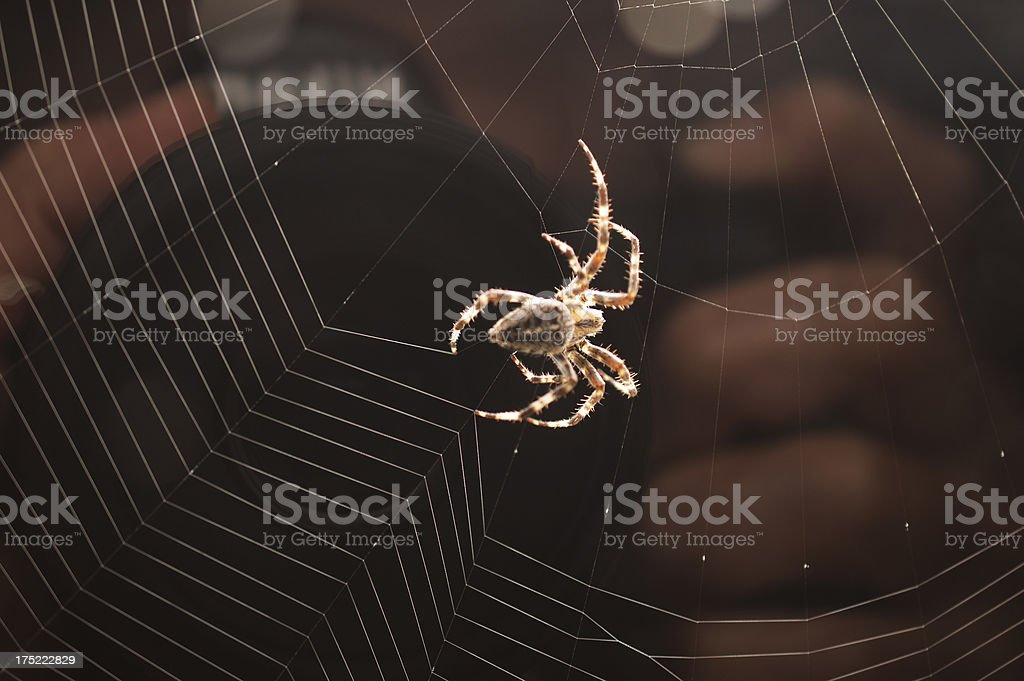 Orb Web Of A Cross Spider royalty-free stock photo
