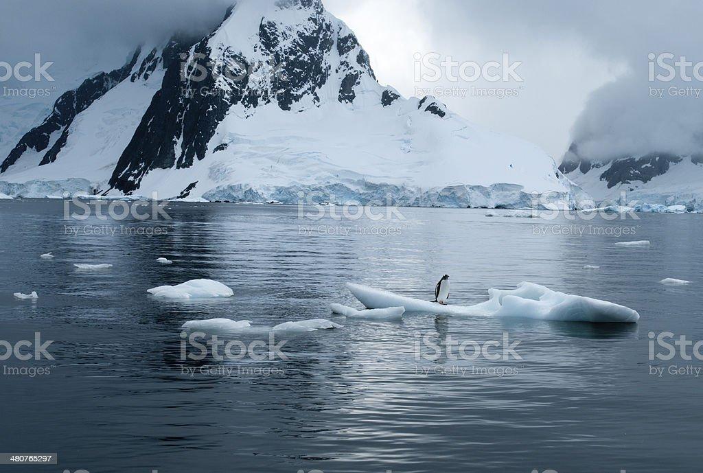 Orca  Bait--Penguin on Bite-Size Piece of Drift Ice stock photo