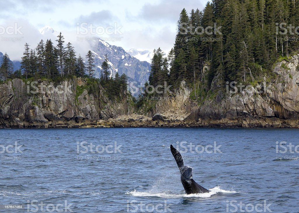 Orca Tail stock photo