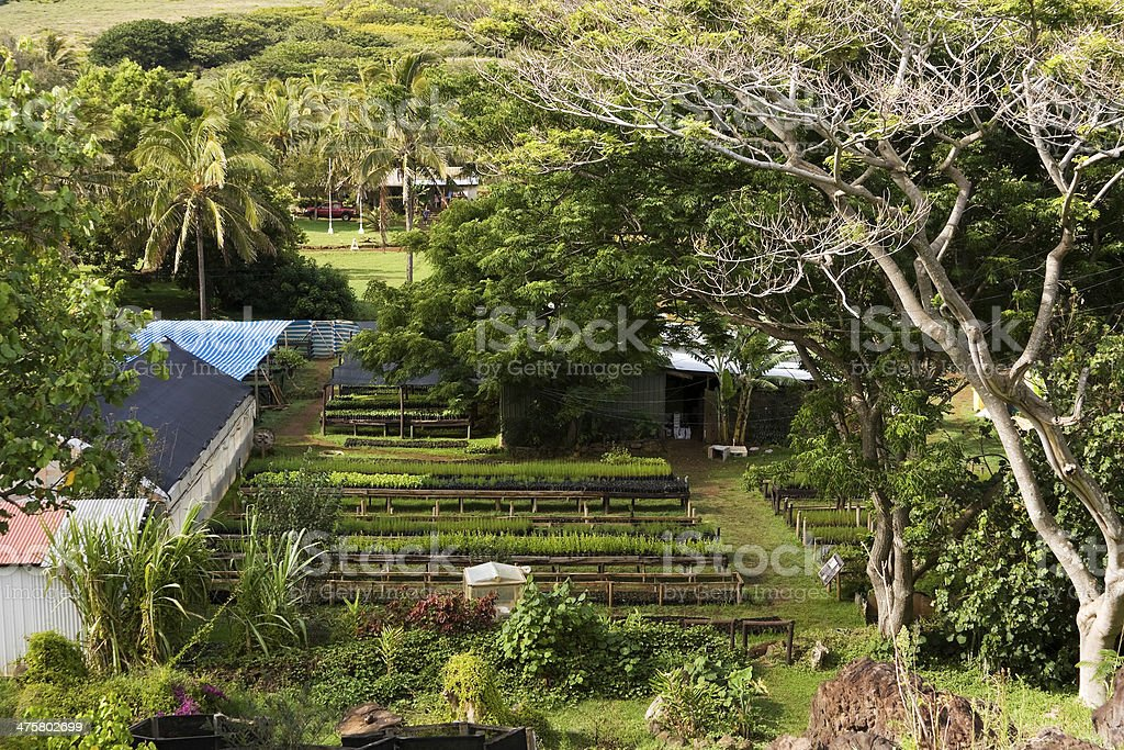 Orchard in Easter Island royalty-free stock photo