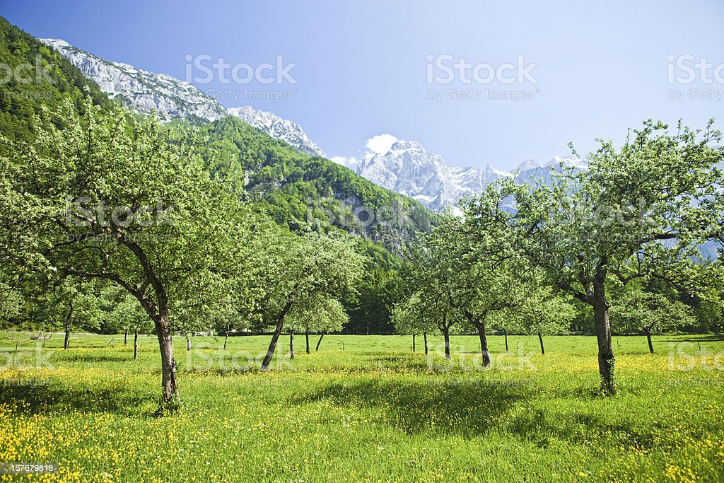Orchard in idyllic Alps valley Logarska dolina royalty-free stock photo