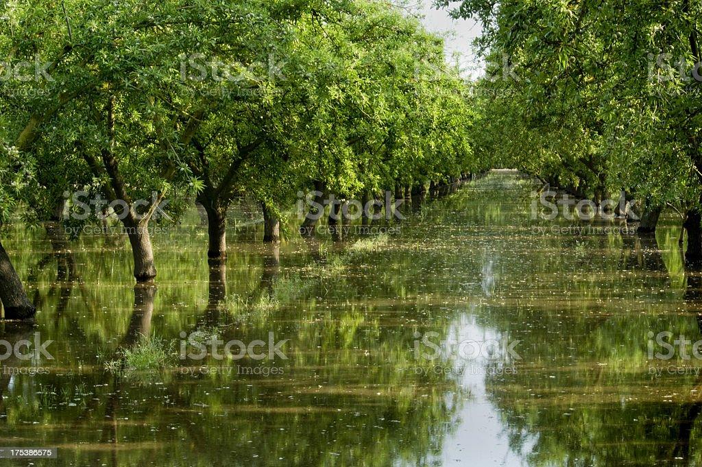 Orchard Irrigation stock photo