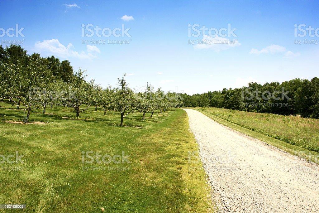 Orchard Lane royalty-free stock photo